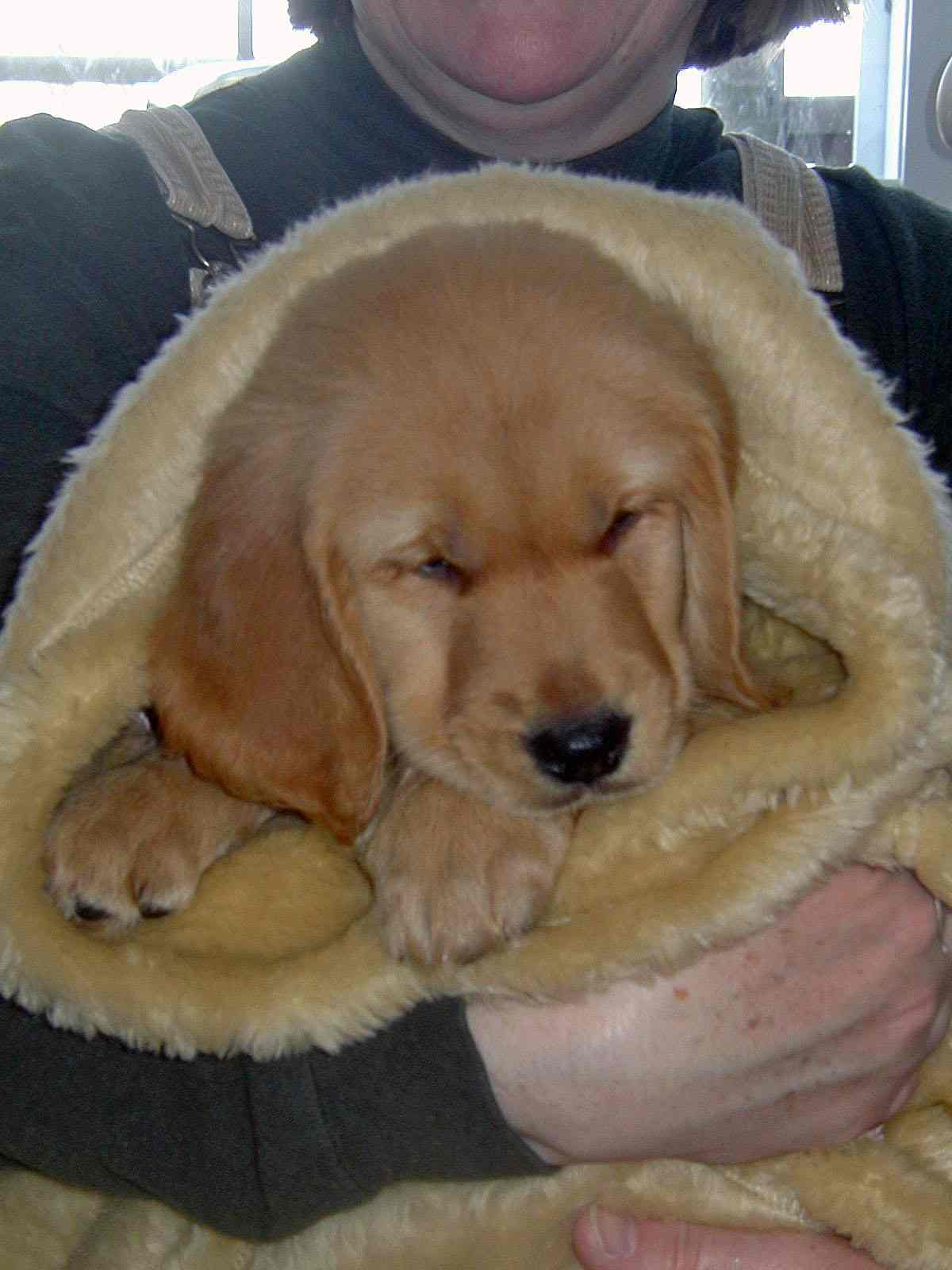 Golden Retriever Rescue, Inc  (NJ) Newsletter Winter 2005/Front Page