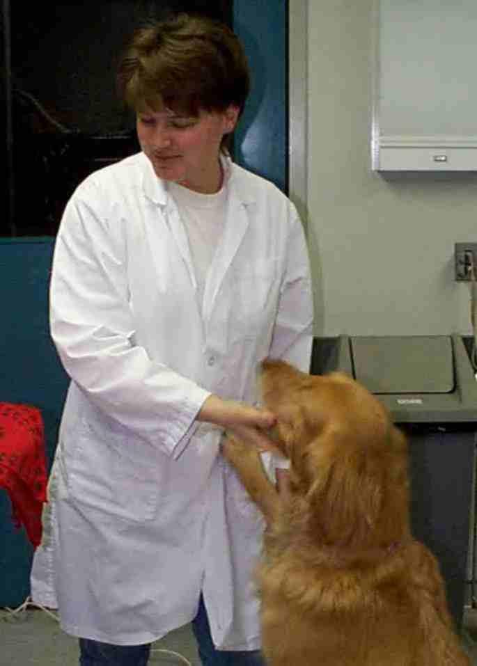 Golden Retriever Rescue Inc Nj Newsletter Summer 2000 Animal